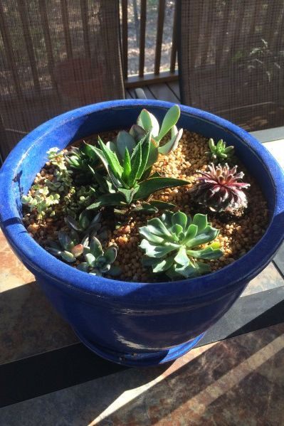 Nifty Succulent Planter In 30 Minutes!