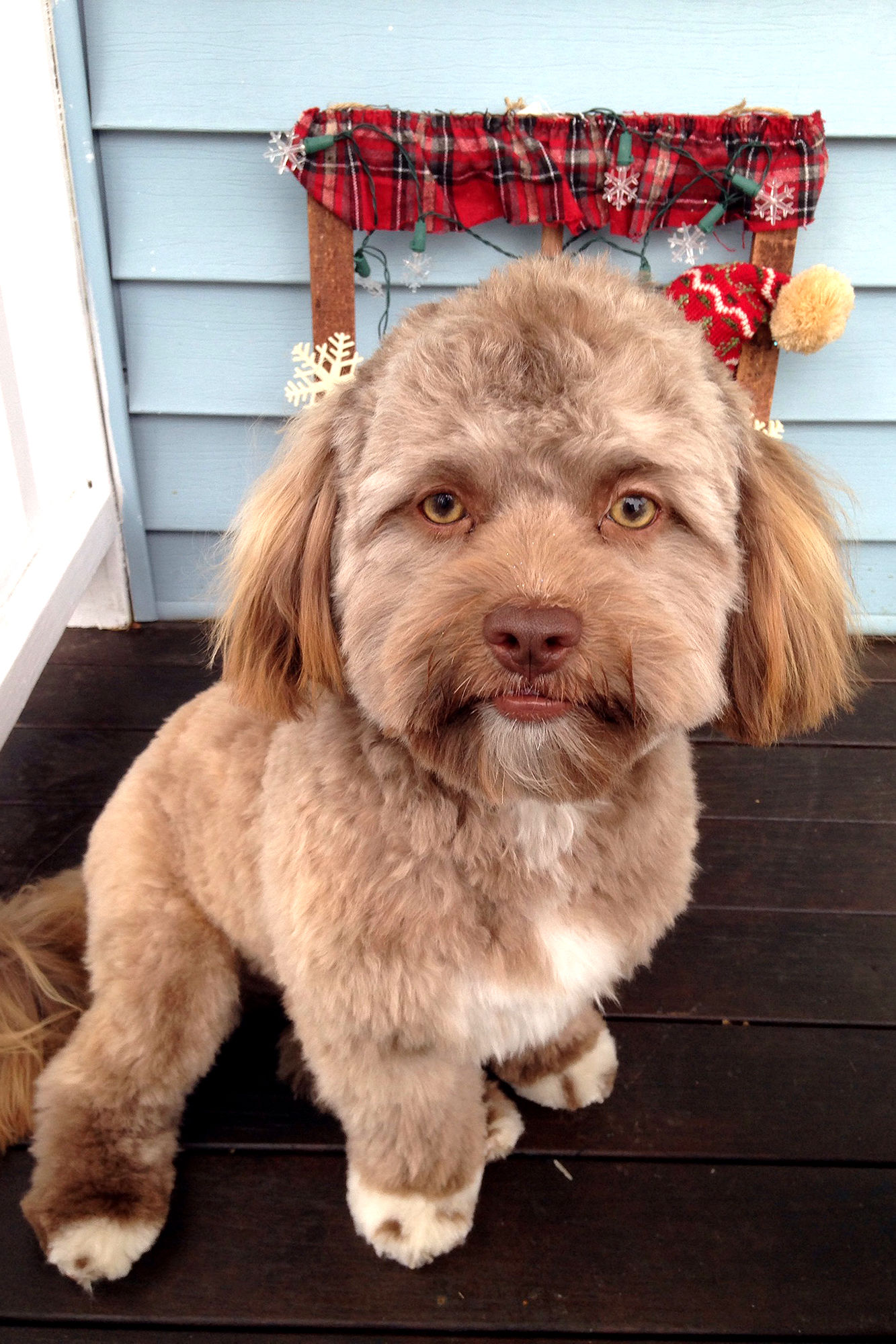 The Internet Is Barking Up a Storm About This Dog with an Incredibly Human Face