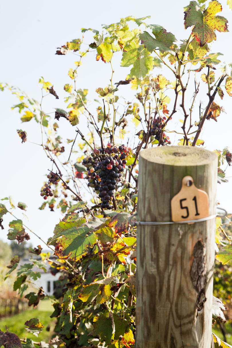 48. Celebrating Milestones: Barboursville Vineyards Turns 40
