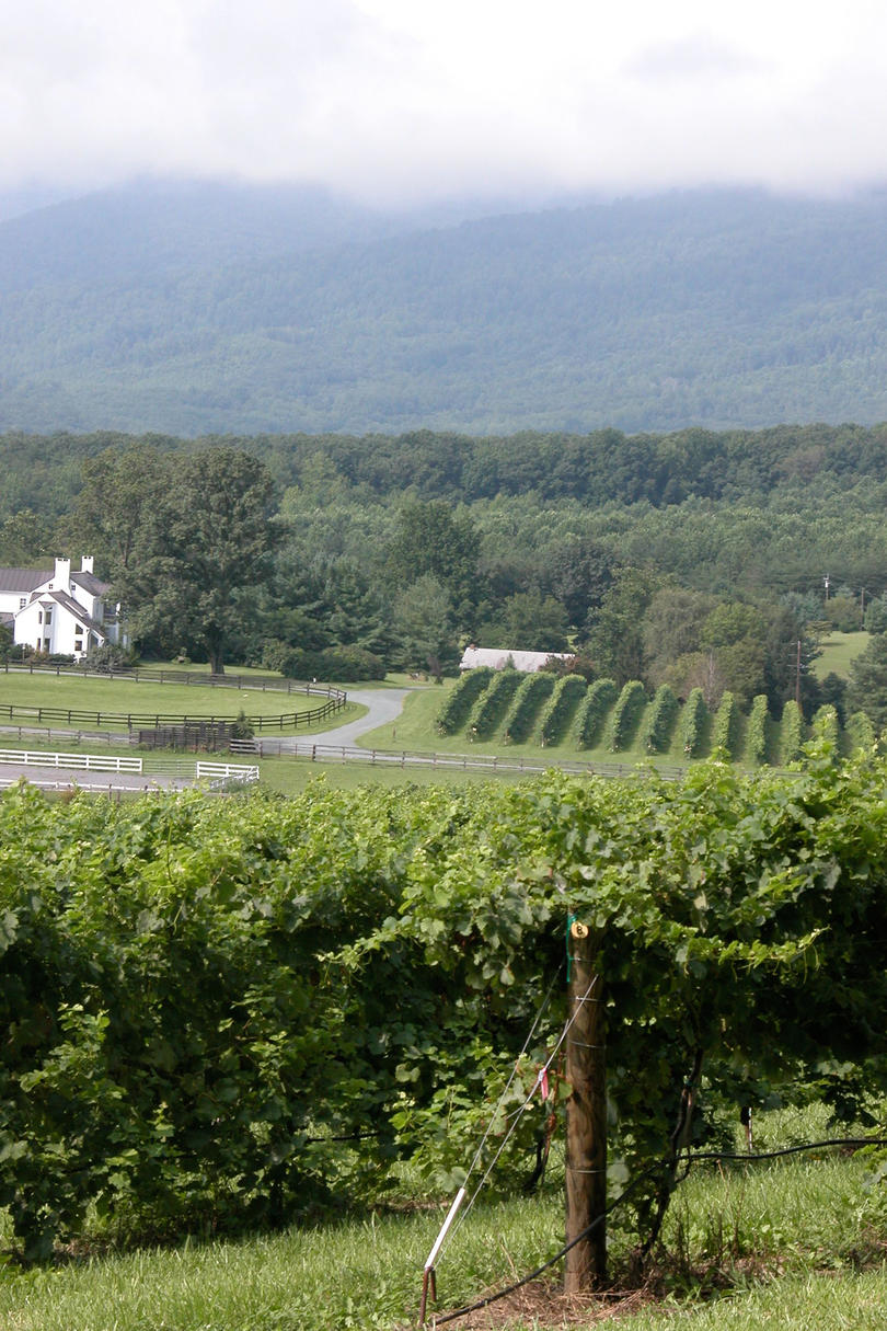 Veritas Vineyard & Winery (Afton, Virginia)