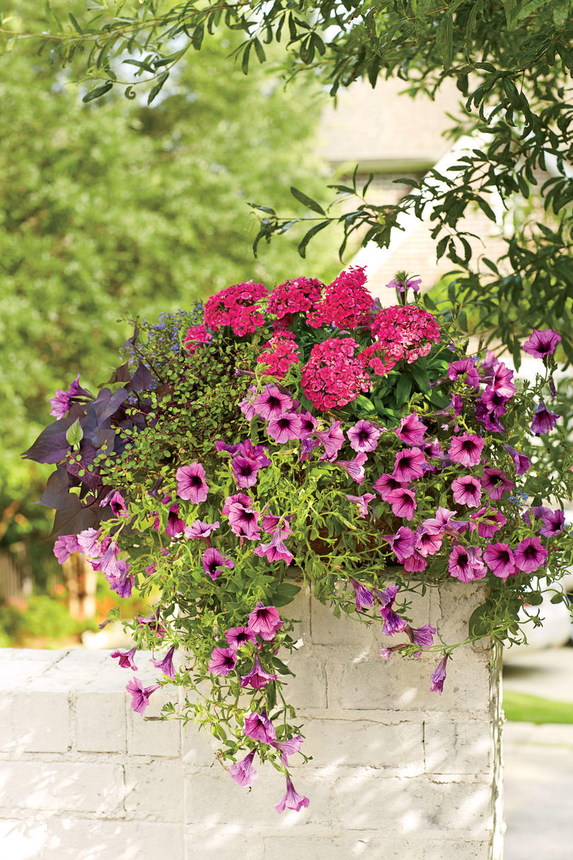 Romantic Wall Swag Container Spectacular Container Gardening