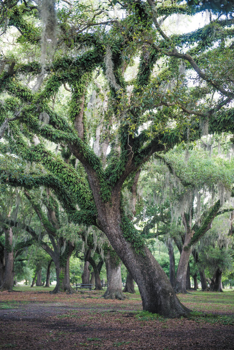 City Park (New Orleans, Louisiana)
