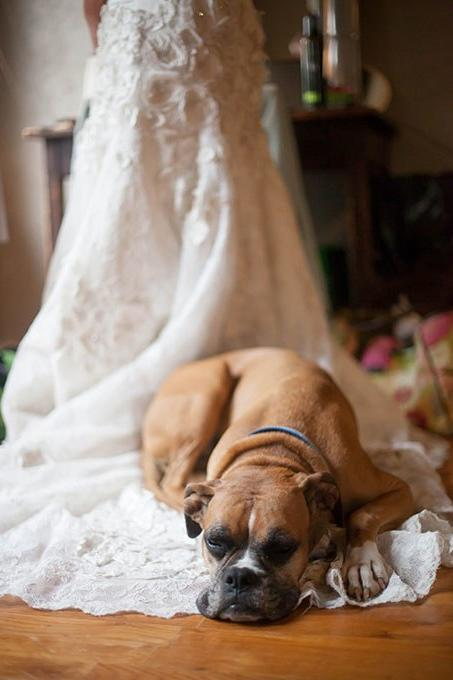 TK Creative Ways to Dress Your Dog for the Big Day: Just Dog