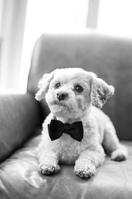 Looking Fly in a Simple Bow Tie