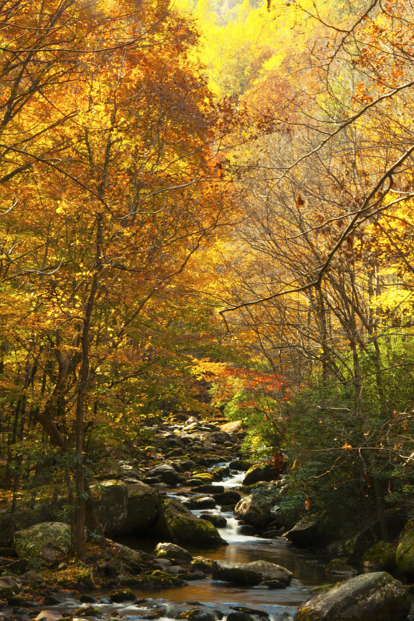 8 Prettiest Places in Tennessee for Fall Color