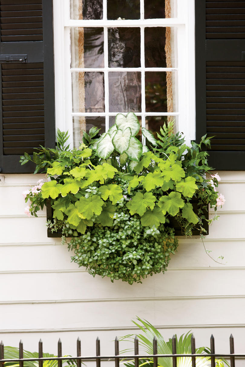 Planter Box Ideas Front Porches Patio