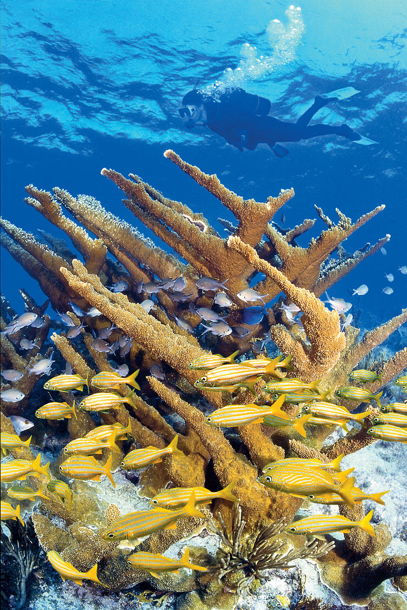 Wow Factor: The only living coral reef in the contiguous U.S., this shallow-water wilderness is one of the top snorkeling and diving destinations on the planet.You'll Love If: Lying on a beach makes you antsExplore It: A snorkeling tour ($45) takes you