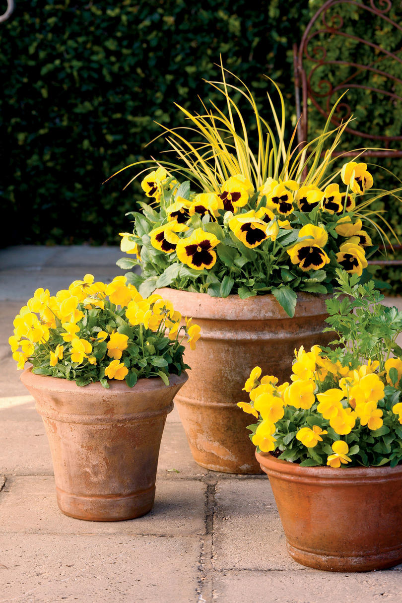 Bright Gold Fall Container Gardens & Fall Containers Anyone Can Recreate