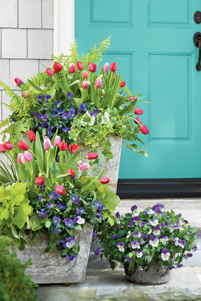 Tulips Pansies Acorus Heuchera Ivy And Fern