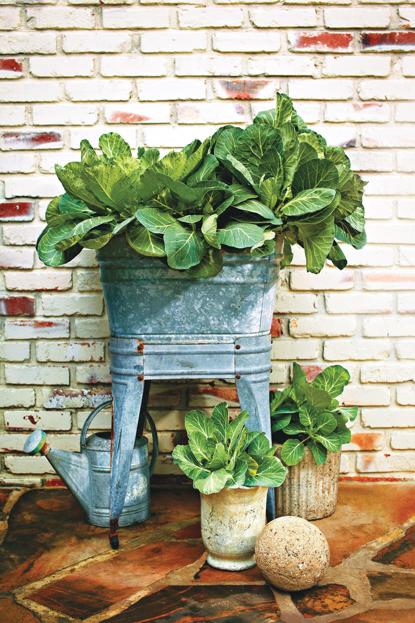 Fall Container Gardening Ideas