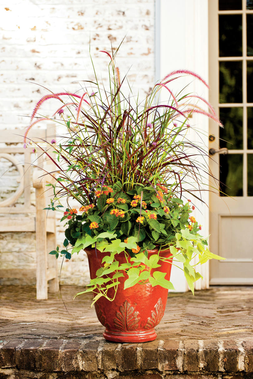Vibrant Seasonal Pot