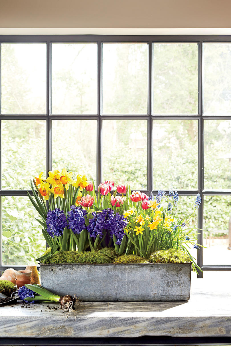 Indoor Container Garden Ideas - Southern Living