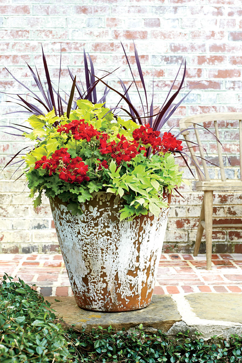 Spectacular container gardening ideas southern living geraniums built for the south izmirmasajfo