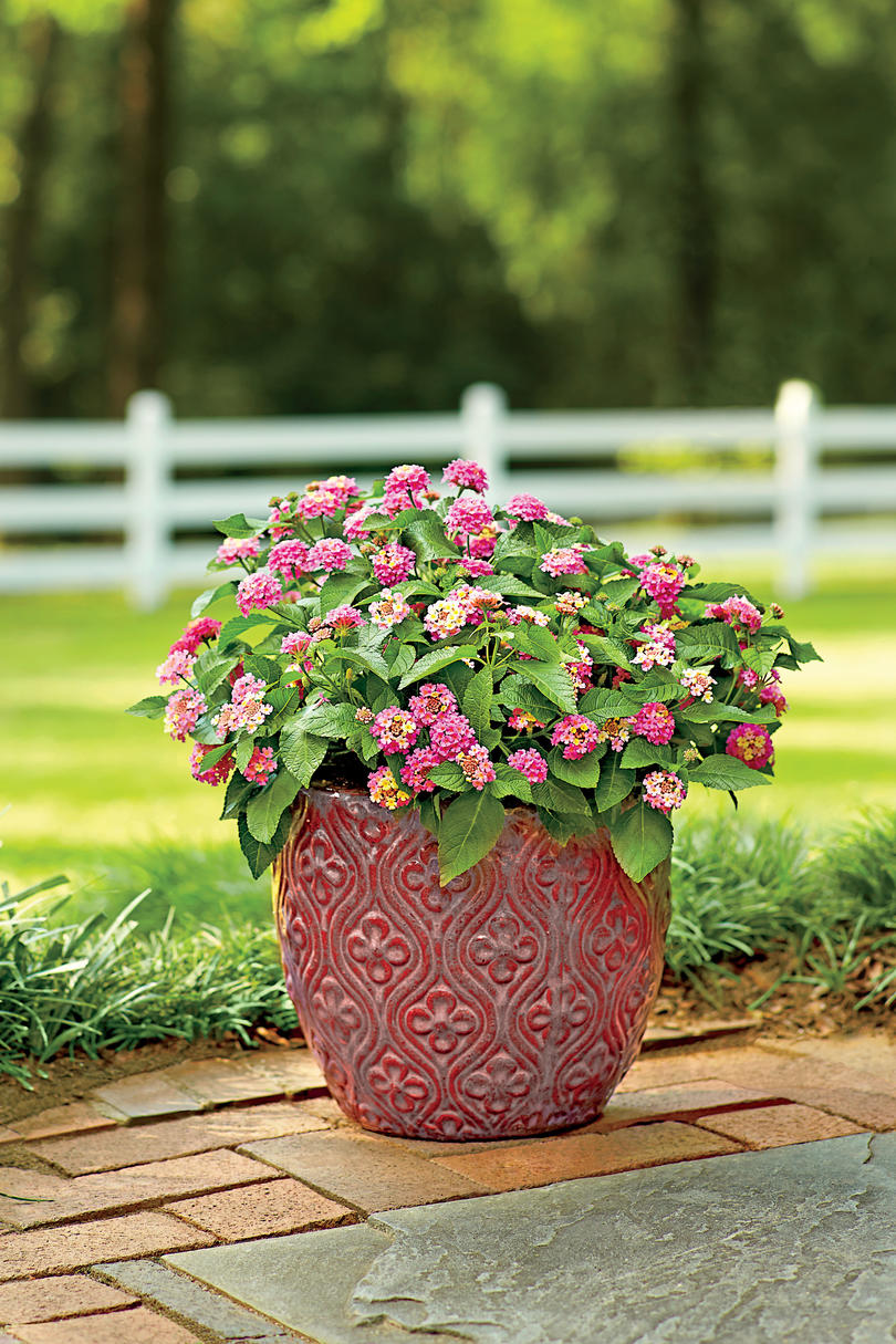 Flowering southern trees you need to plant now southern living blooming lantana dhlflorist Gallery