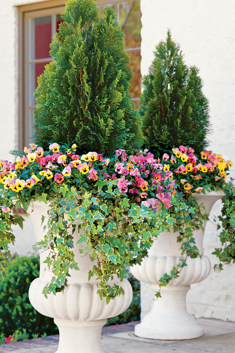 Exceptional Evergreens And Annuals