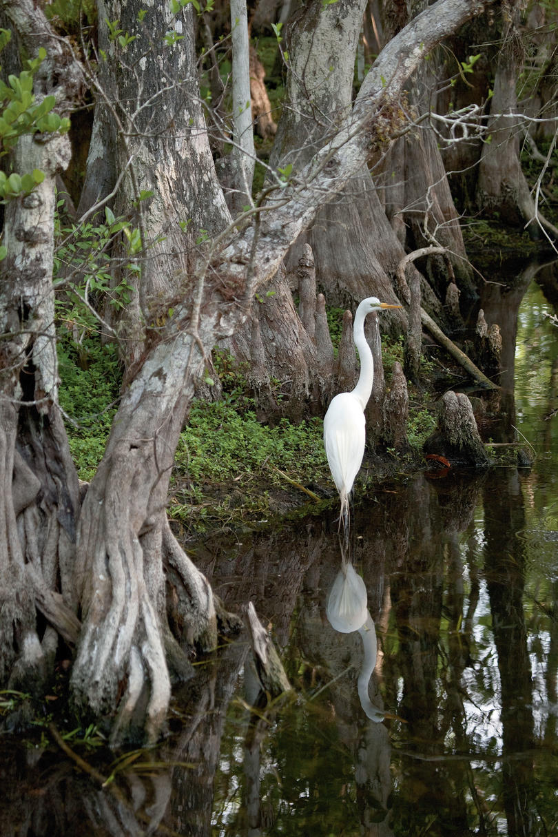 """Wow Factor: This 1.5-million-acre """"river of grass"""" is the largest mangrove ecosystem in the western hemisphere. It's been designated a World Heritage Site and an International Biosphere Reserve.You'll Love If: You dug Wild Kingdom.Explore It: Take a tra"""