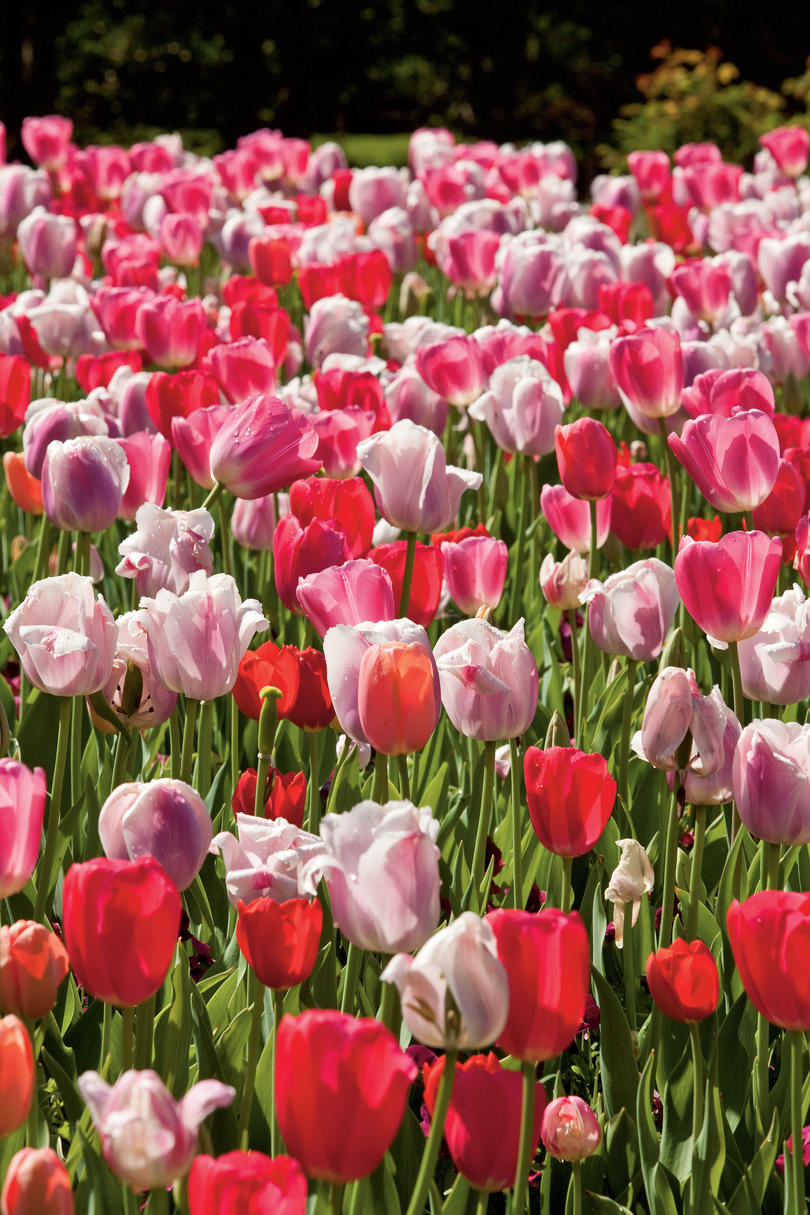 The south 39 s best garden tours southern living for Tulip garden in texas