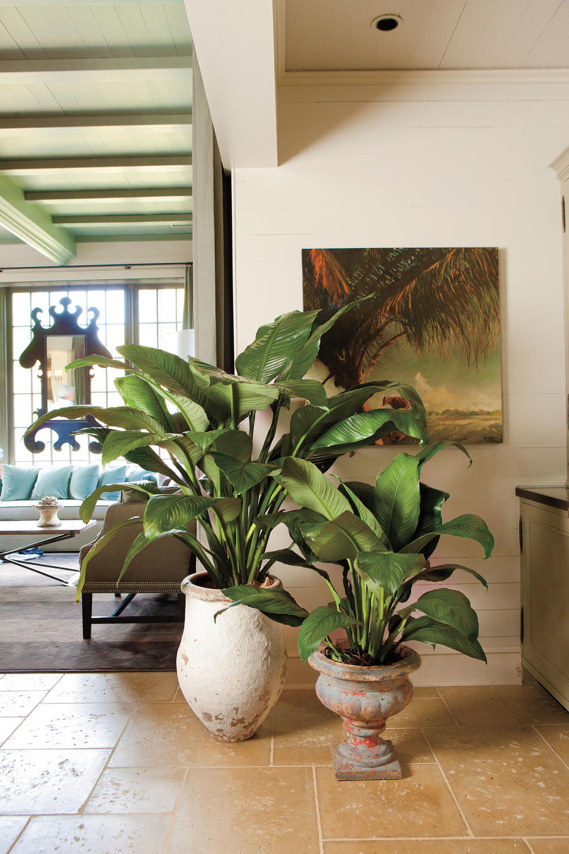 unbelievable house plant with green and pink leaves. Peace Lilies Best Indoor Houseplants Southern Living  sensational design green leaf house plants The 100 Sensational Design Green Leaf House Plants Pictures