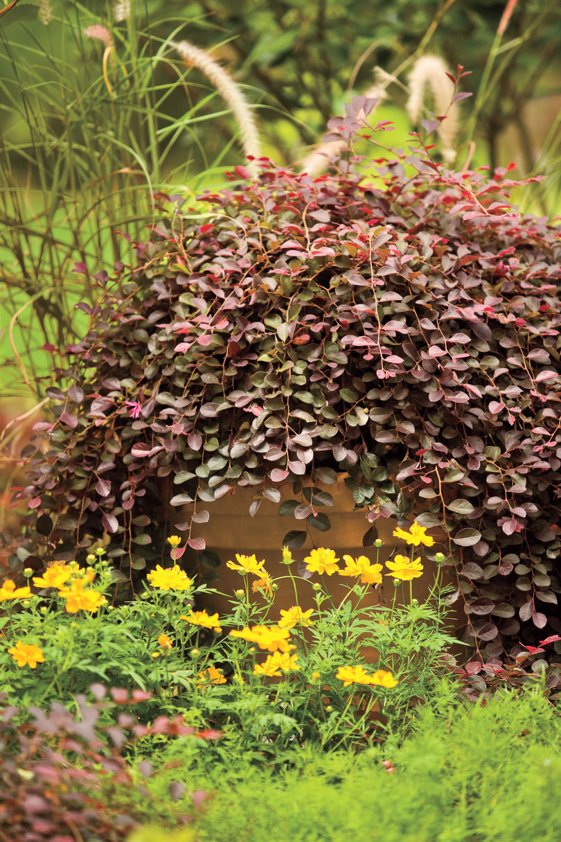 The Eight Best Plants to Grow - Southern Living