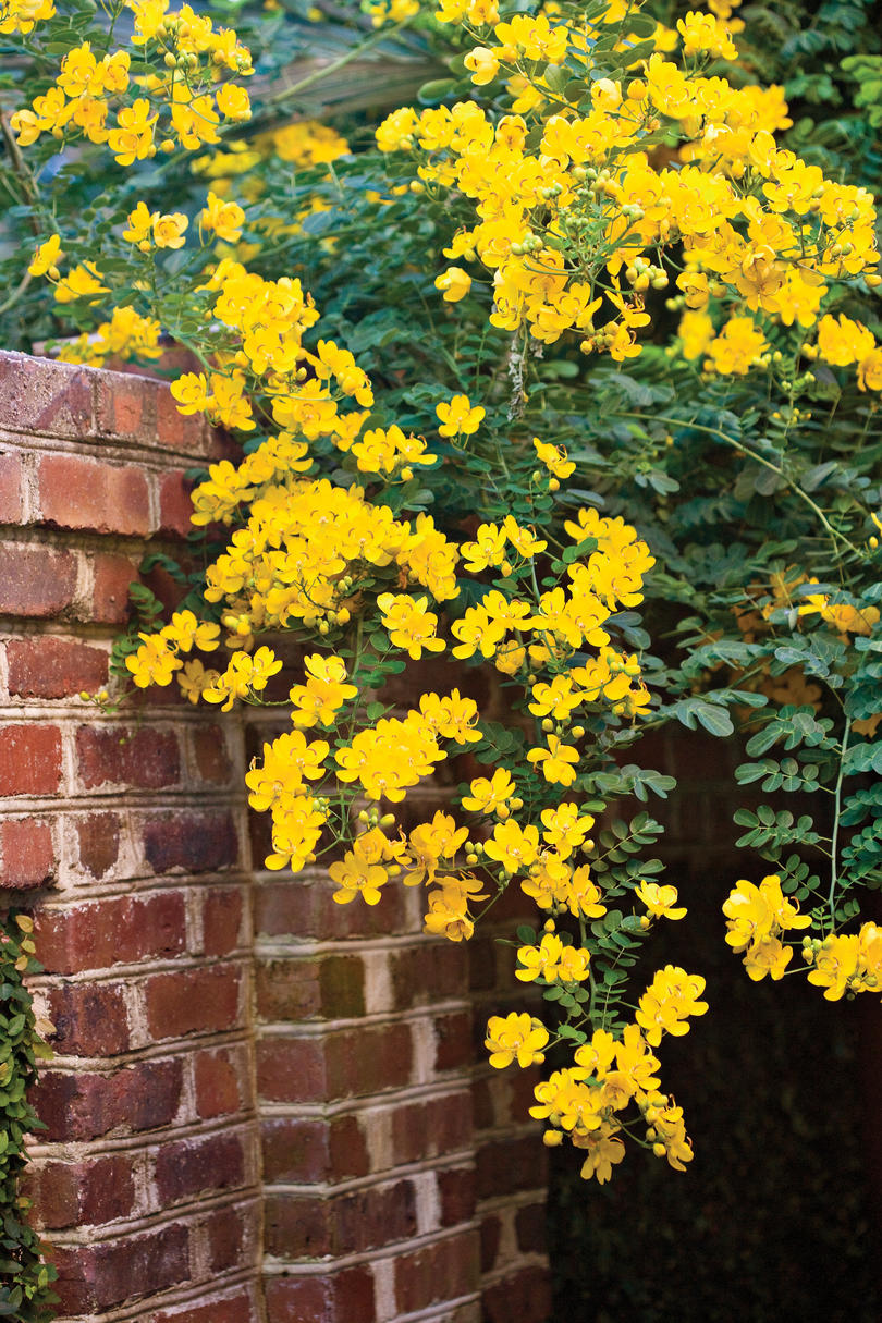 Autumn Gold Flowers Southern Living