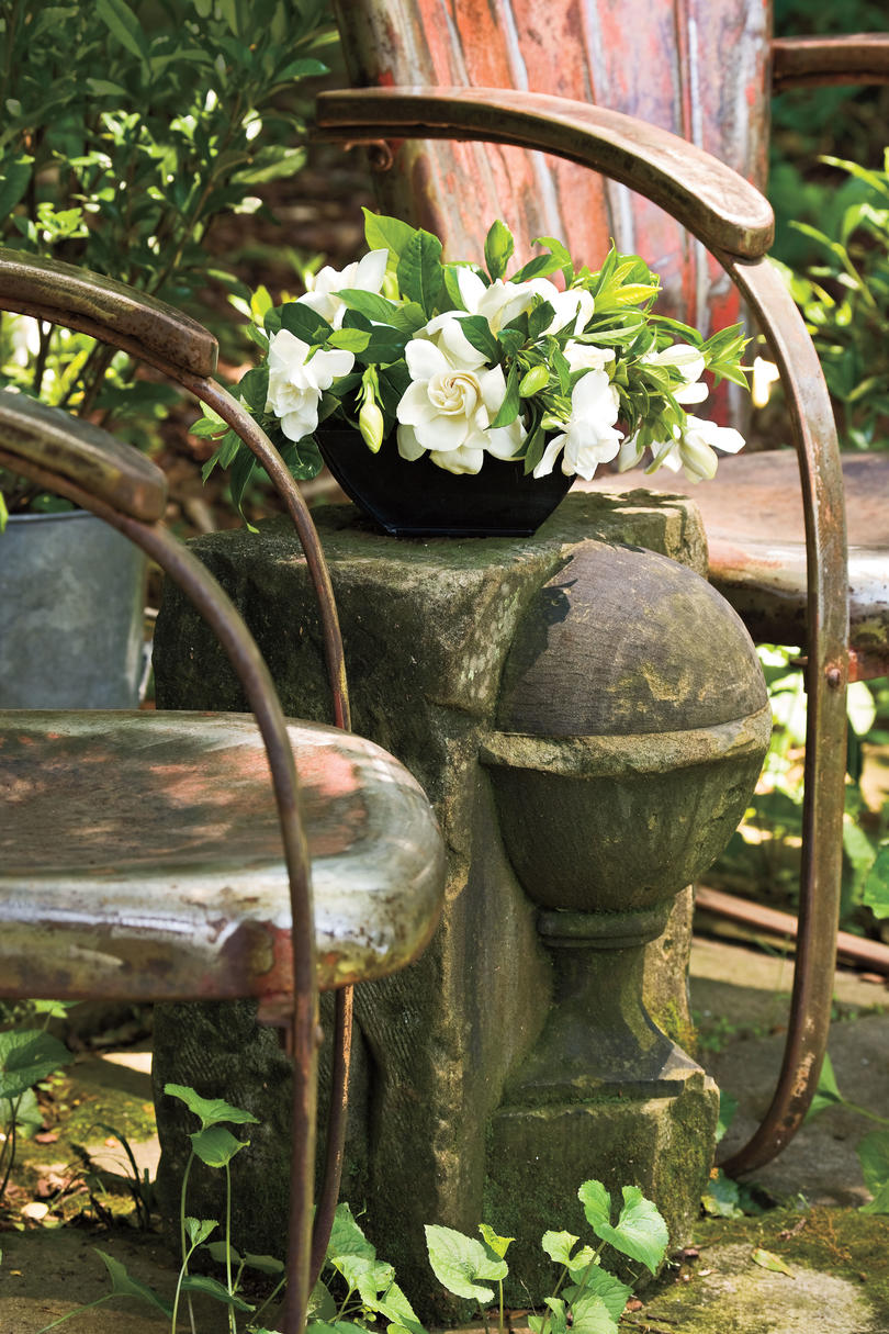 Southern Gardening: Charleston\'s 5 Iconic Plants - Southern Living
