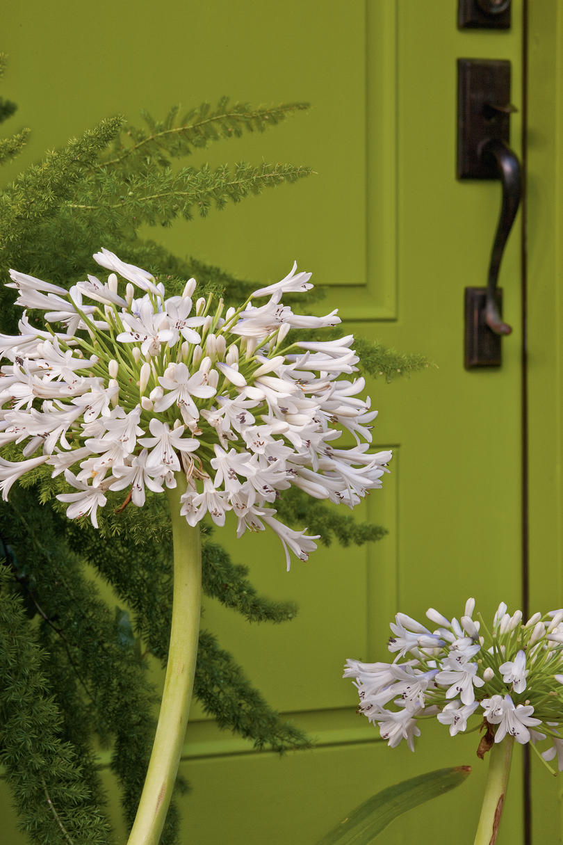 Make the Front Door a Focal Point