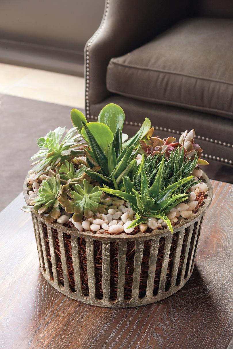 Mini Tabletop Succulents