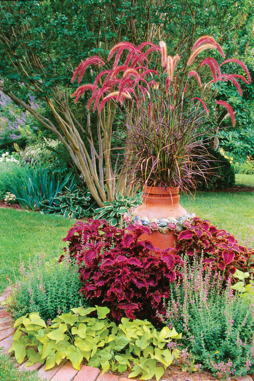 Purple Fountain Grass and Coleus