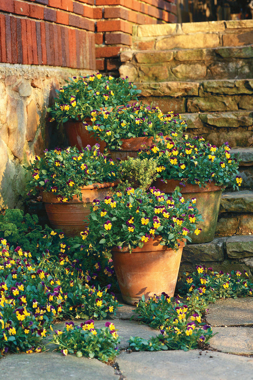124 container gardening ideas