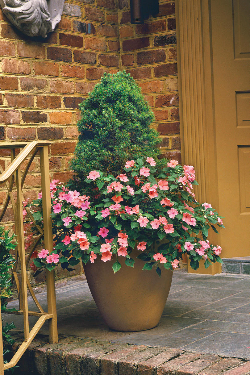 Spectacular Container Gardening Ideas - Southern Living