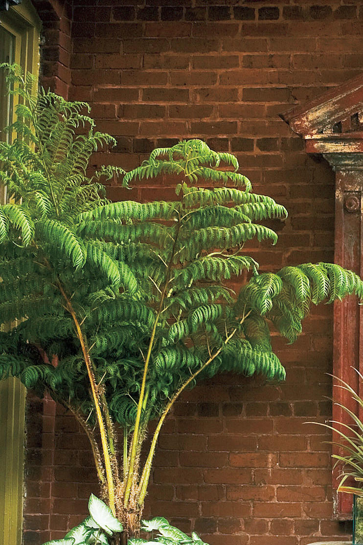 Porch Decorating Ideas: Plants