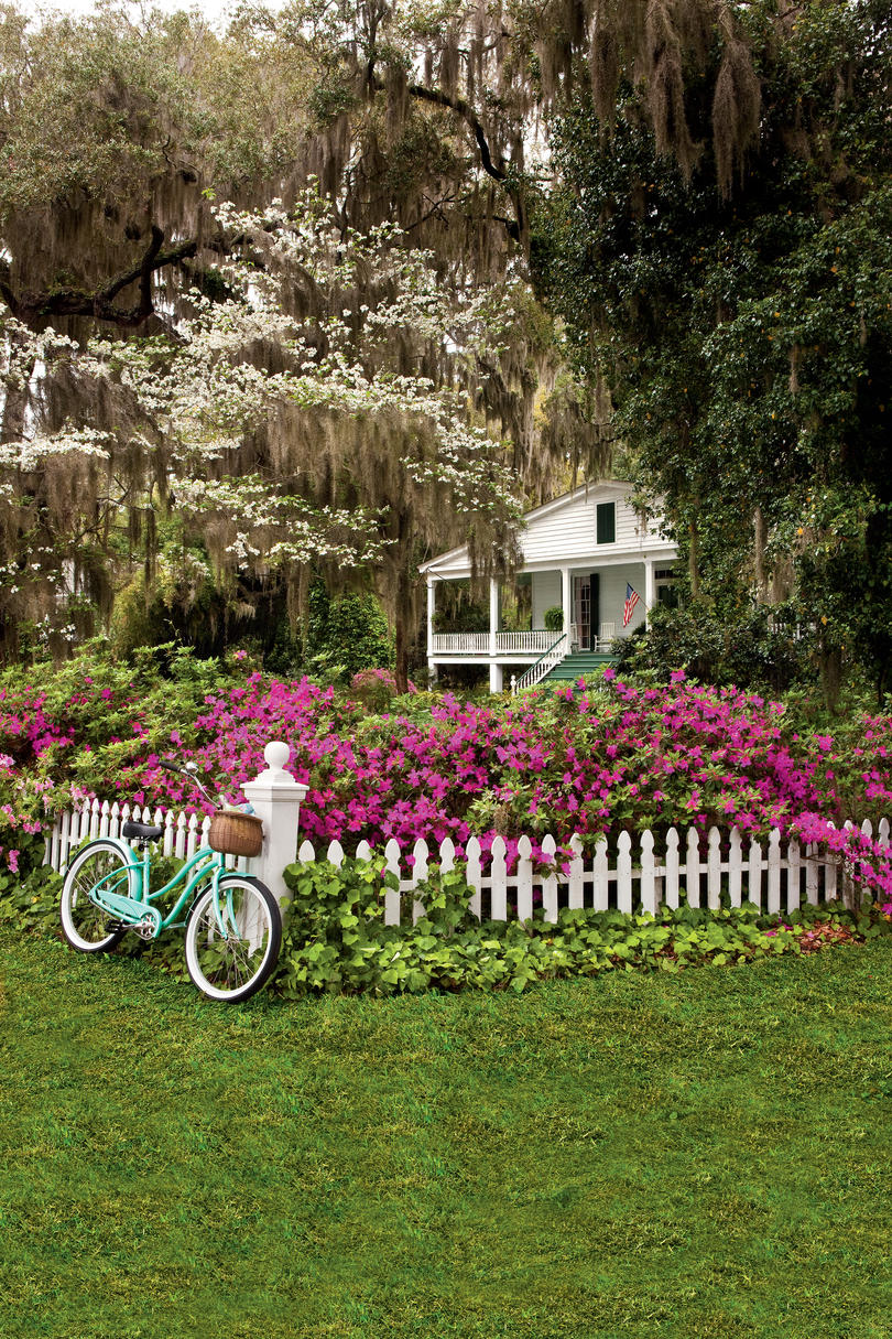 Roses In Garden: Easy Growing: Flowers For Fences