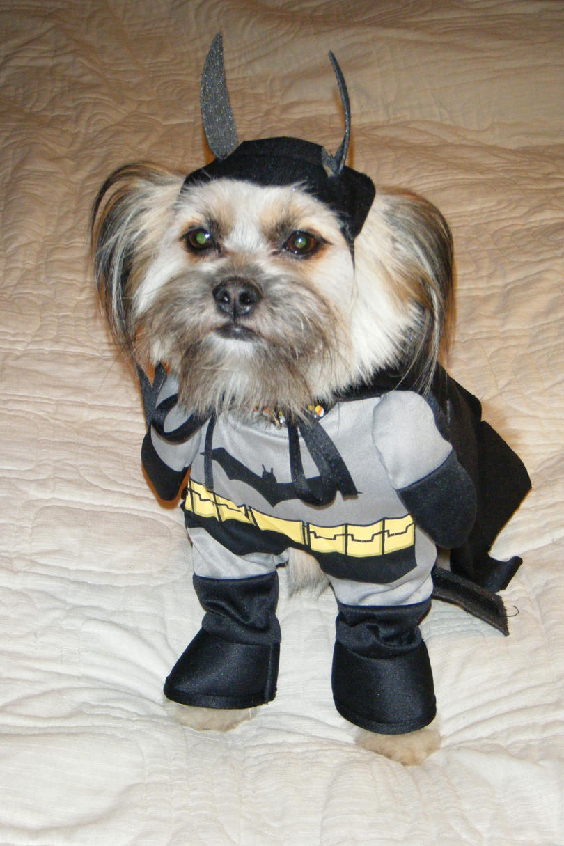 pet halloween costumes southern living