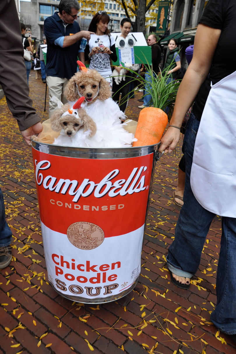 Chicken  Poodle  Soup Dog Costume