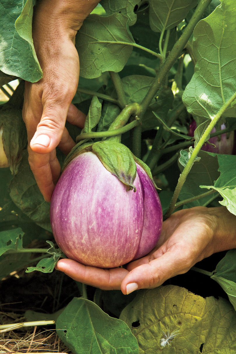 Find Locally Grown Produce Near You