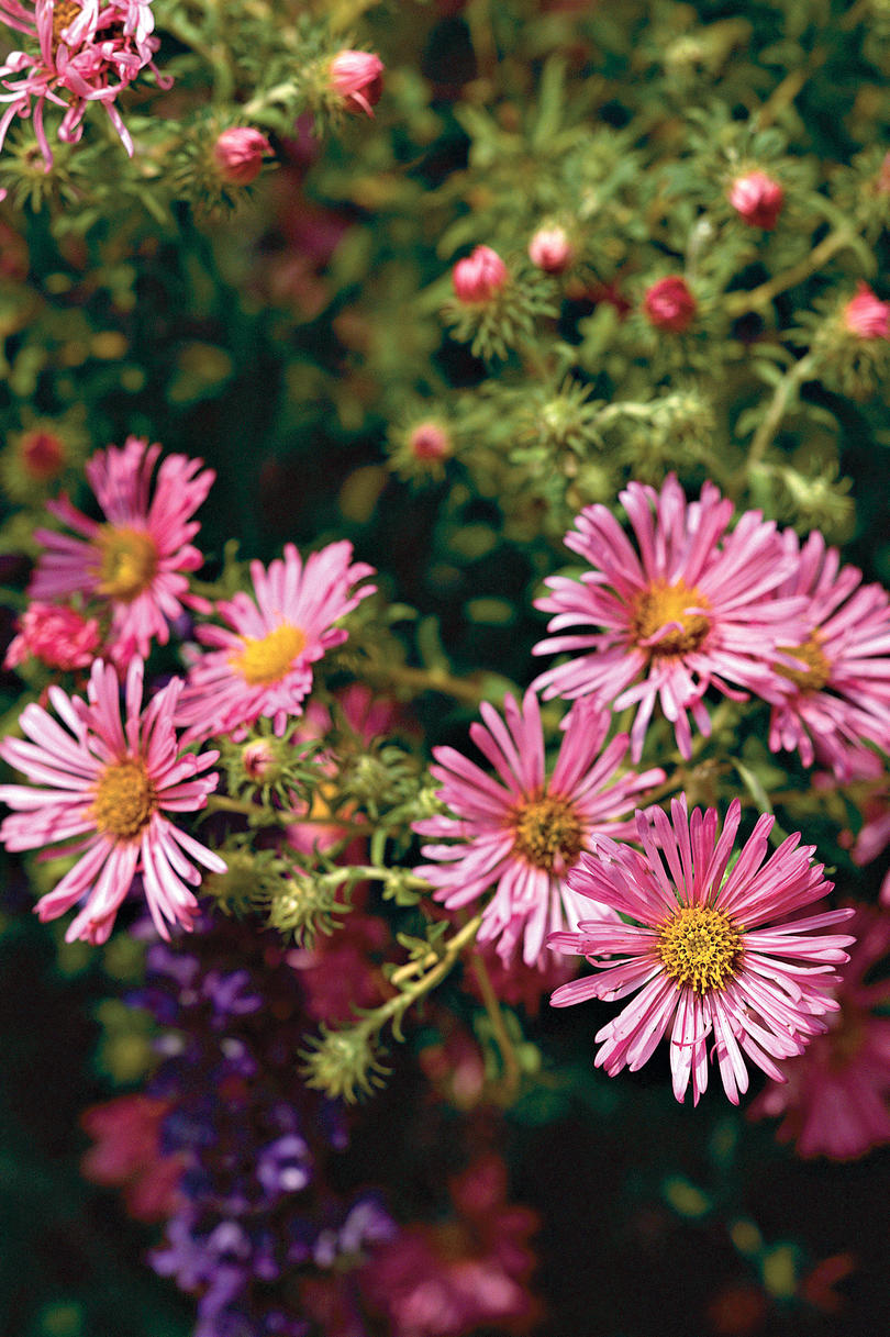 Perennial Flowers Southern Living