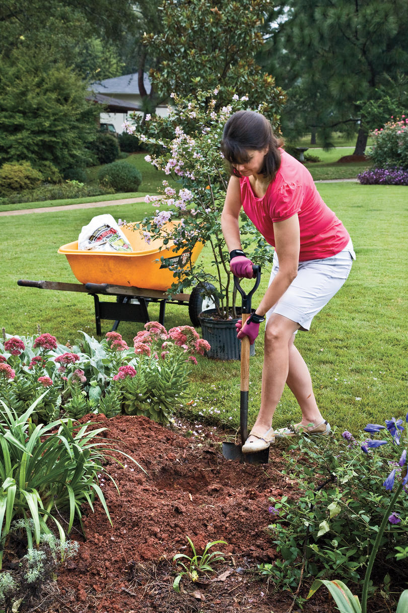 Our favorite crepe myrtle varieties southern living how to plant a crepe myrtle with success step 1 nvjuhfo Choice Image