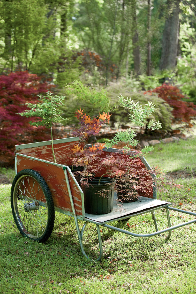 5 Small Trees for Great Fall Color - Southern Living