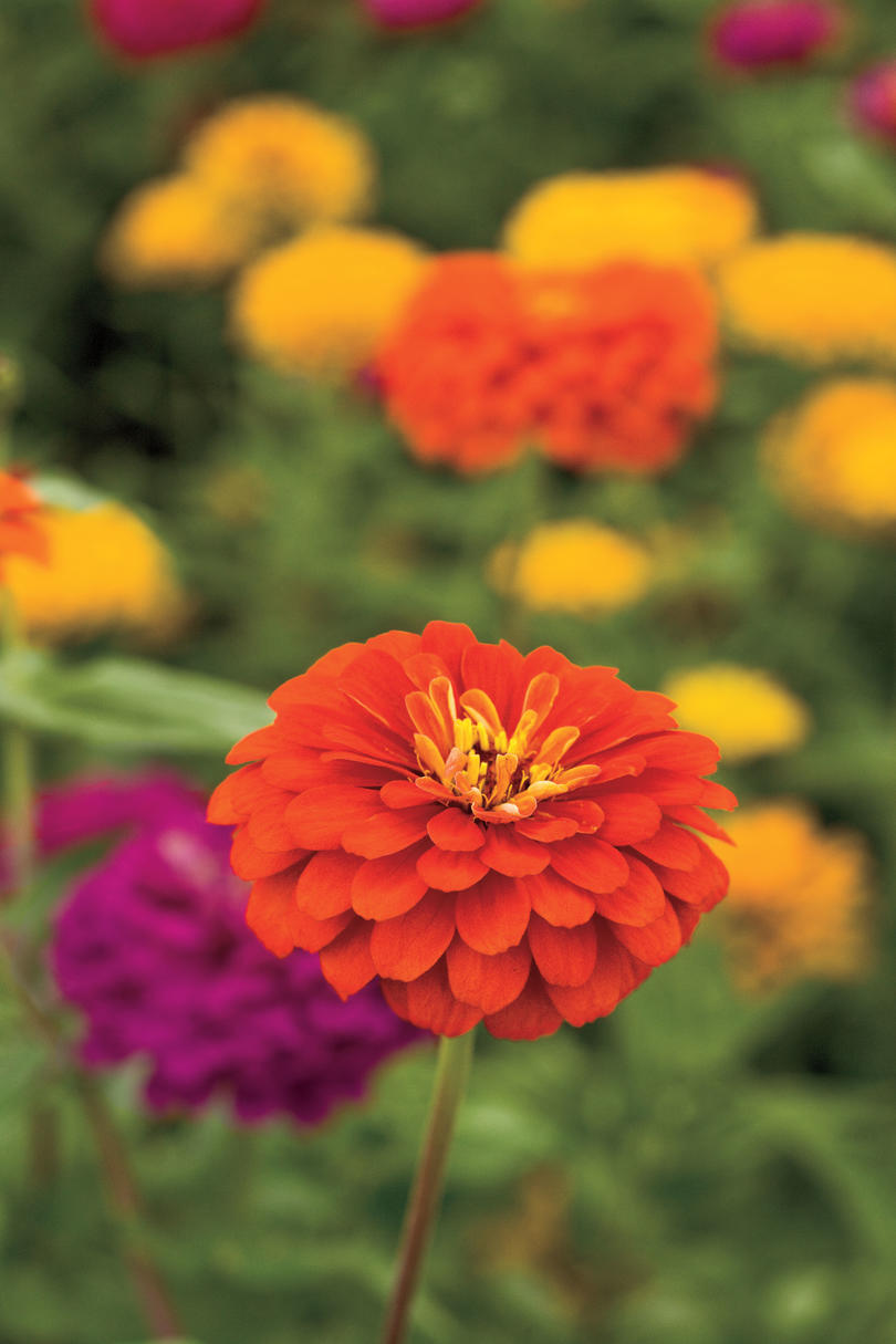 drought tolerant plants southern living