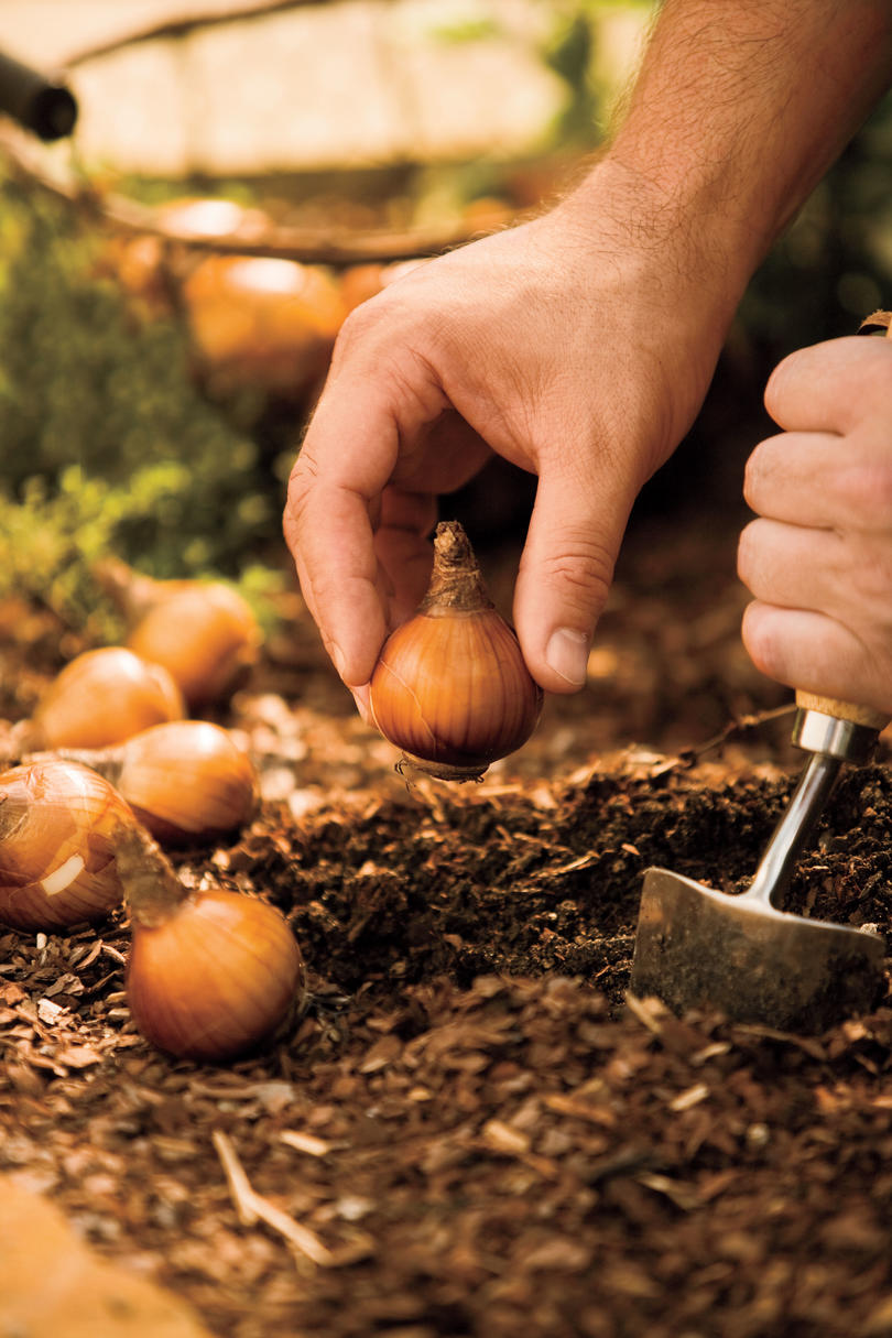 9 Bulbs to Plant Now for Spring - Southern Living