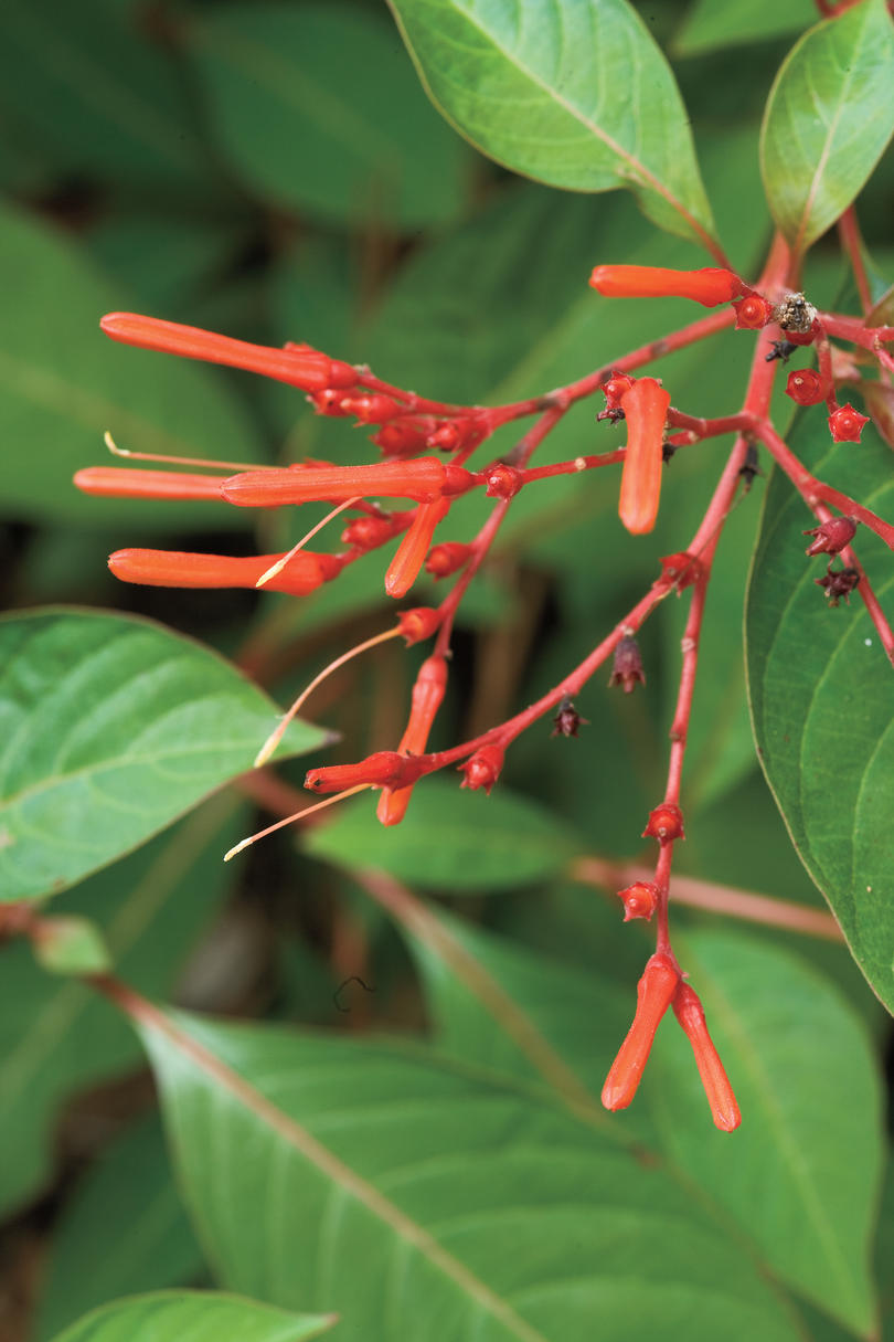 5 Plants That Can Take The Summer Heat Southern Living