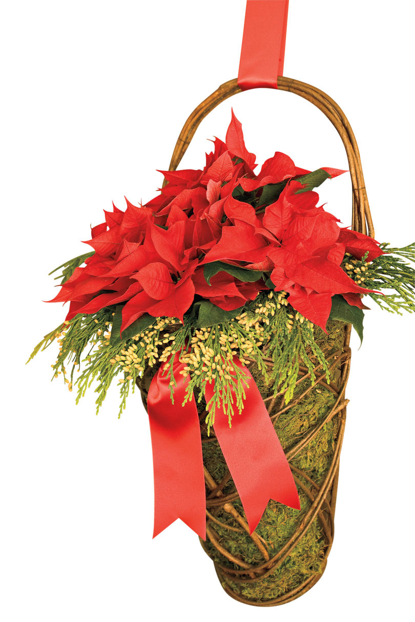 Christmas Decorating Ideas: Poinsettia Moss Basket