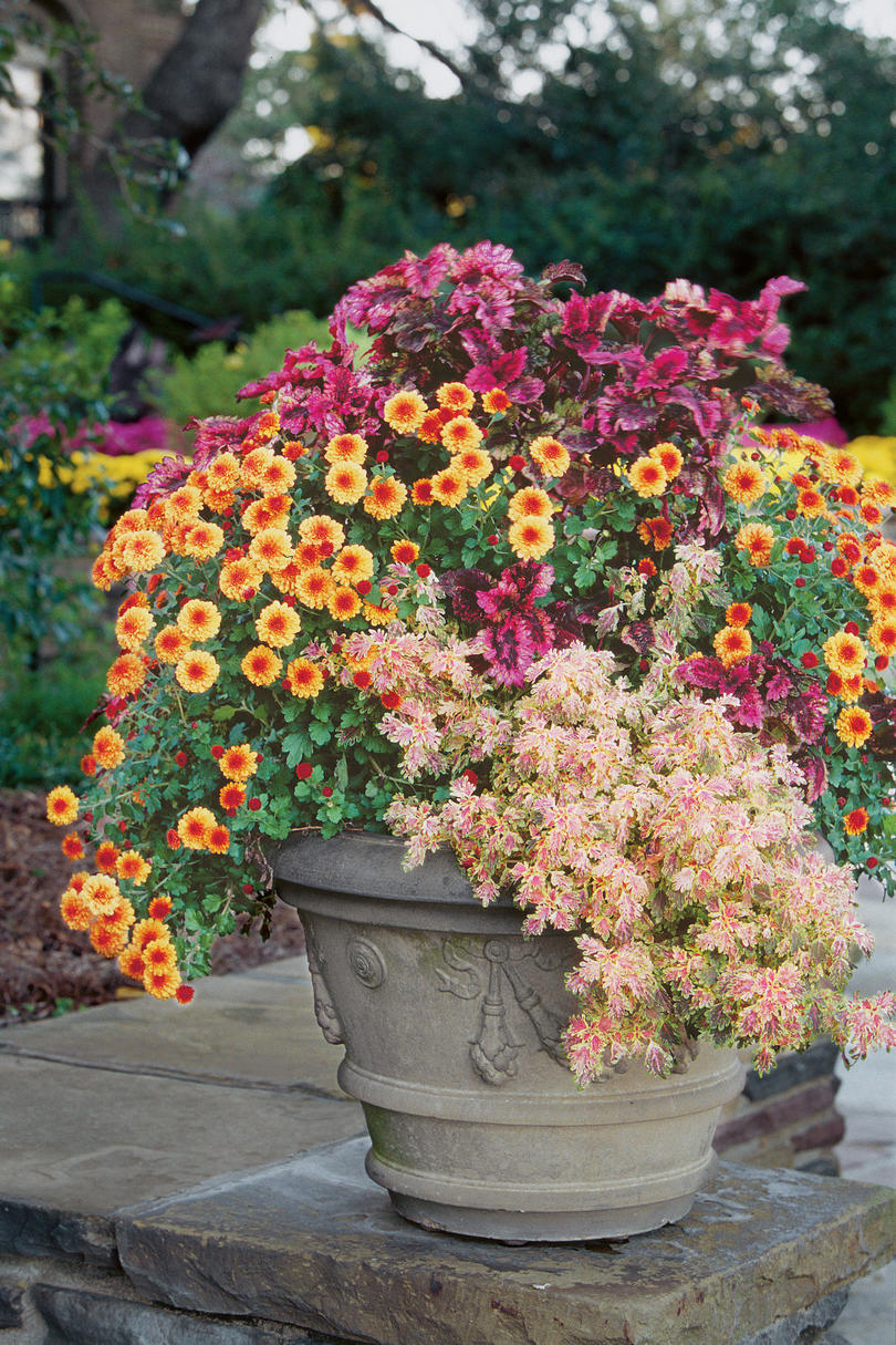 Fall container gardening ideas southern living - Large container gardening ideas ...