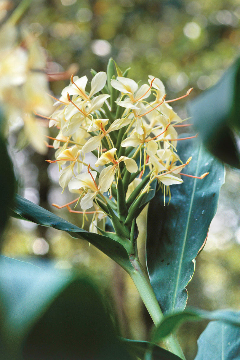 The Souths Best Fragrant Plants For Your Garden Southern Living