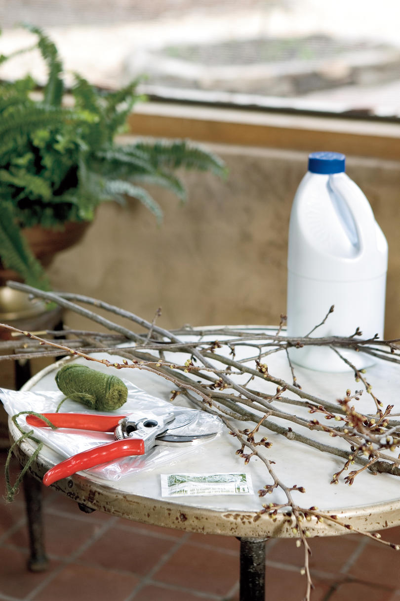 Winter Flowers: Prepare Branches