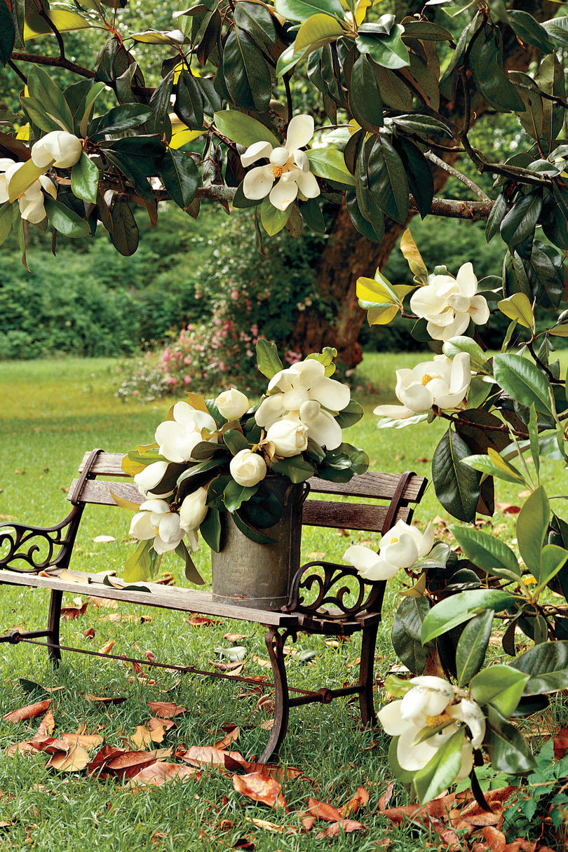 Flowering southern trees you need to plant now southern living magnolia tree mightylinksfo