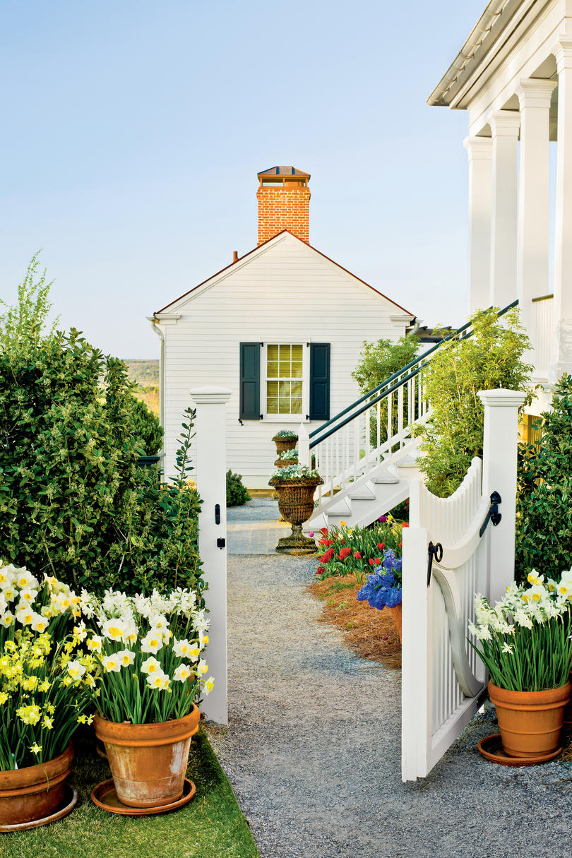 Classic southern plants southern living for Classic house plants