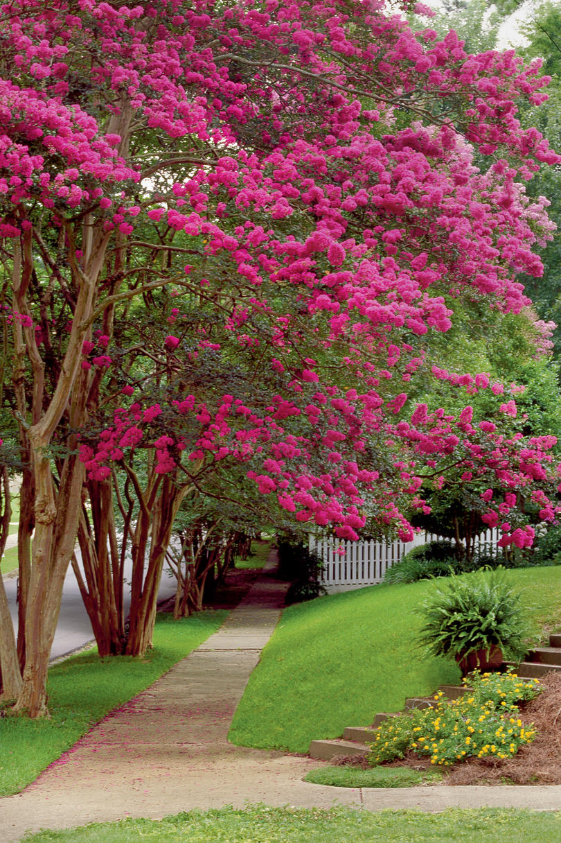 Classic southern plants southern living for Rosewood garden designs