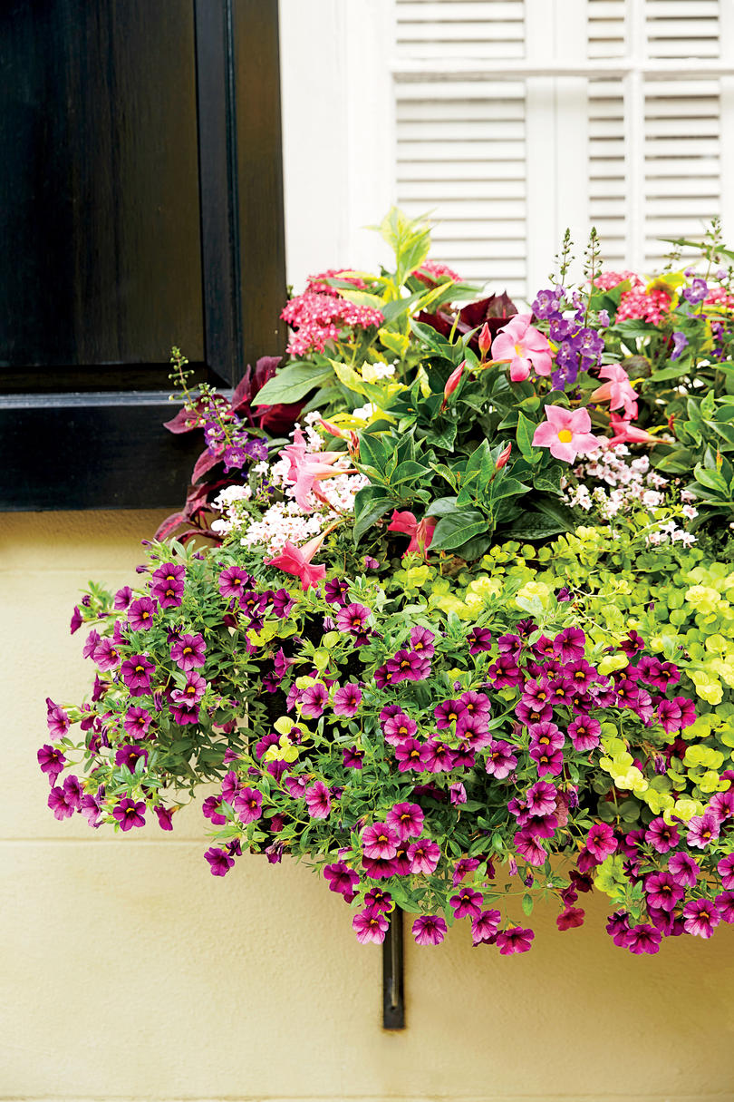 Christmas window box filler - Floral Window Box