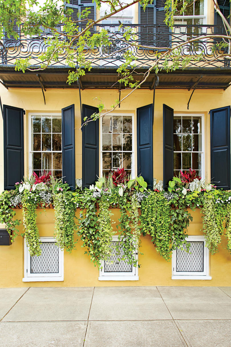Sweeping Vines Window Box Trio & Add Charm with Window Boxes - Southern Living